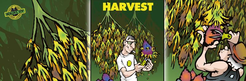 dealerscup-harvest-velden